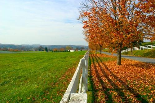 Maryland farmland (by: Orbital Joe, creative commons)